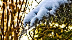 winter-651050_960_720